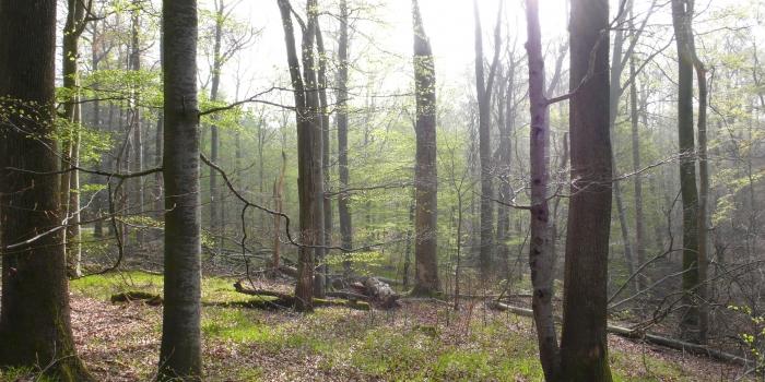 'Hoher Buchener Wald im Ebracher Forst' als geschützter Landschaftsbestandteil ausgewiesen !