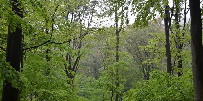 Verein Nationalpark Nordsteigerwald gegründet !