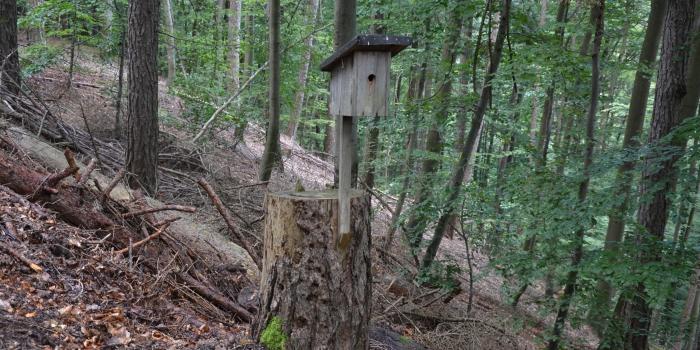 Artenschutz im Steigerwald ?