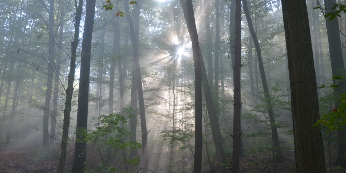 Waldführungen 2015