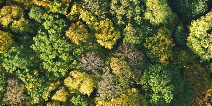 Lang lebe der Hohe Buchene Wald!