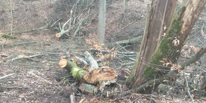 Sägbrunn Buchenmassaker 2019 Handthal & Zerstörung des Buchenwaldes auf ganzer Fläche
